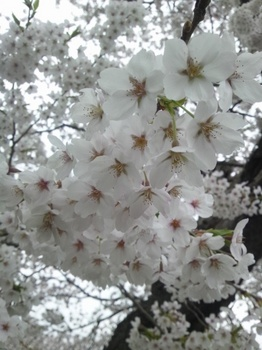 2012-04-25 15.27.11.JPG